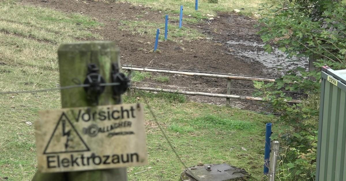 Gleißenberg Stier