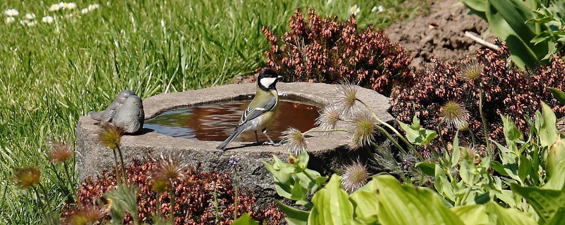 Berühmt Hitze in Bayern: Wasserstelle für Vögel und Co. aufstellen | TVA @PV_82